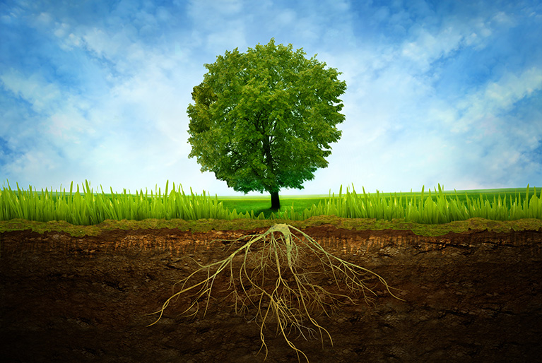 How Trees Can Affect Your Home's Foundation
