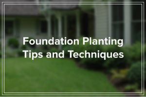 What You Need to Know About Landscaping and Your Home's Foundation